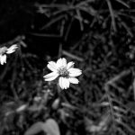 Flowers Yrelka Camp